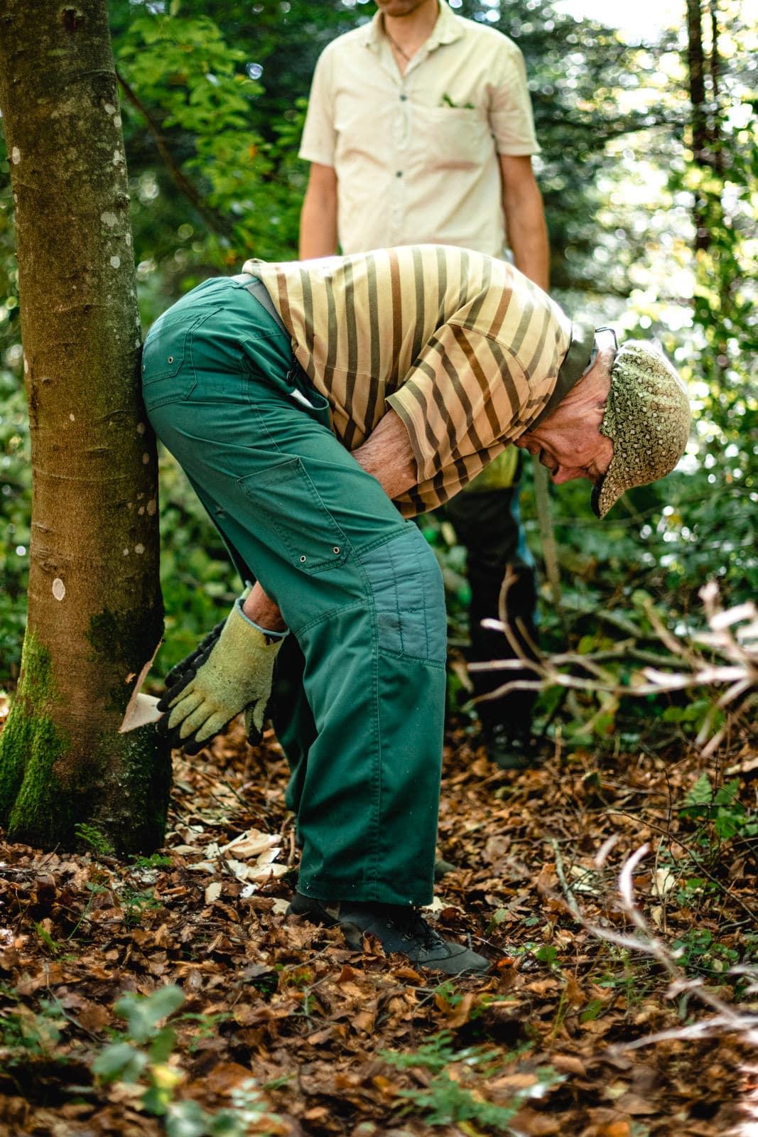Ein Mann steht an einem Baum und misst die Fallrichtung eines Baumes