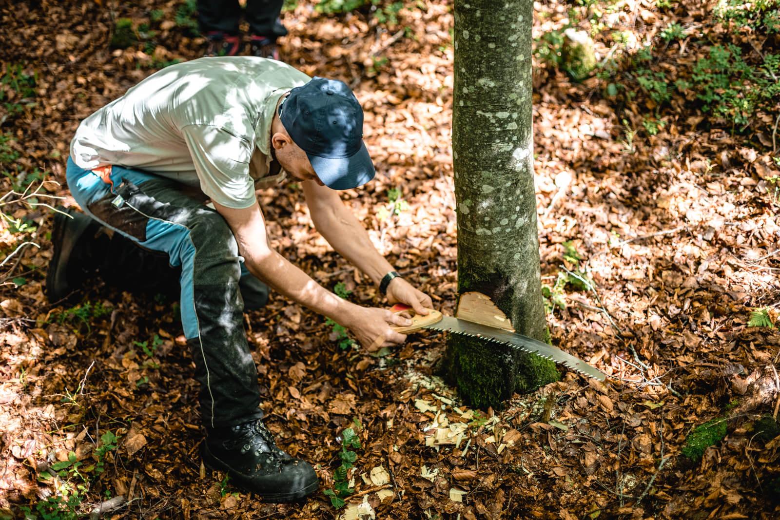 Ein Mann zeigt die Schnitttiefe an einem Baum mit seiner Handsäge