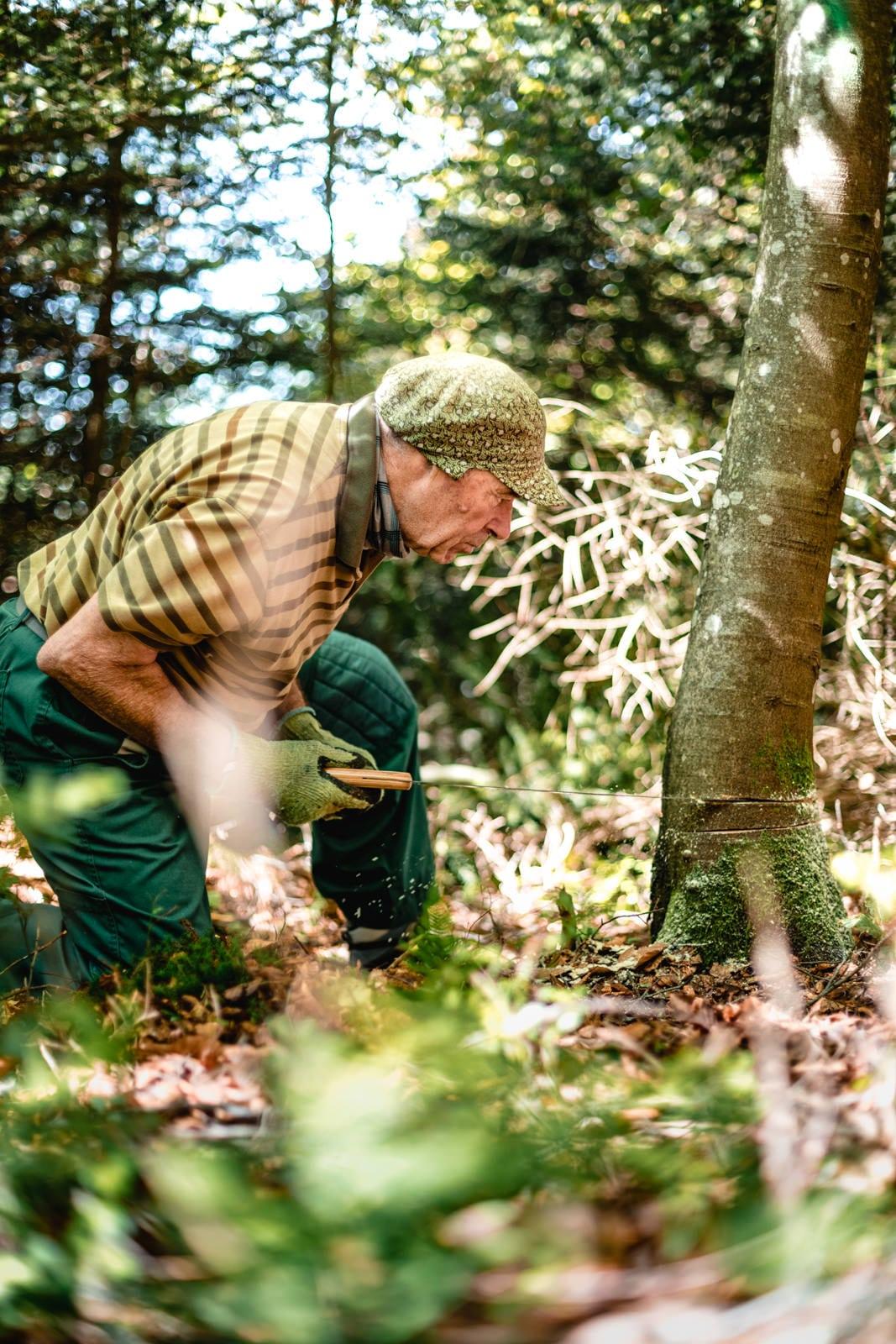 Ein alter Mann sägt einen Baum um