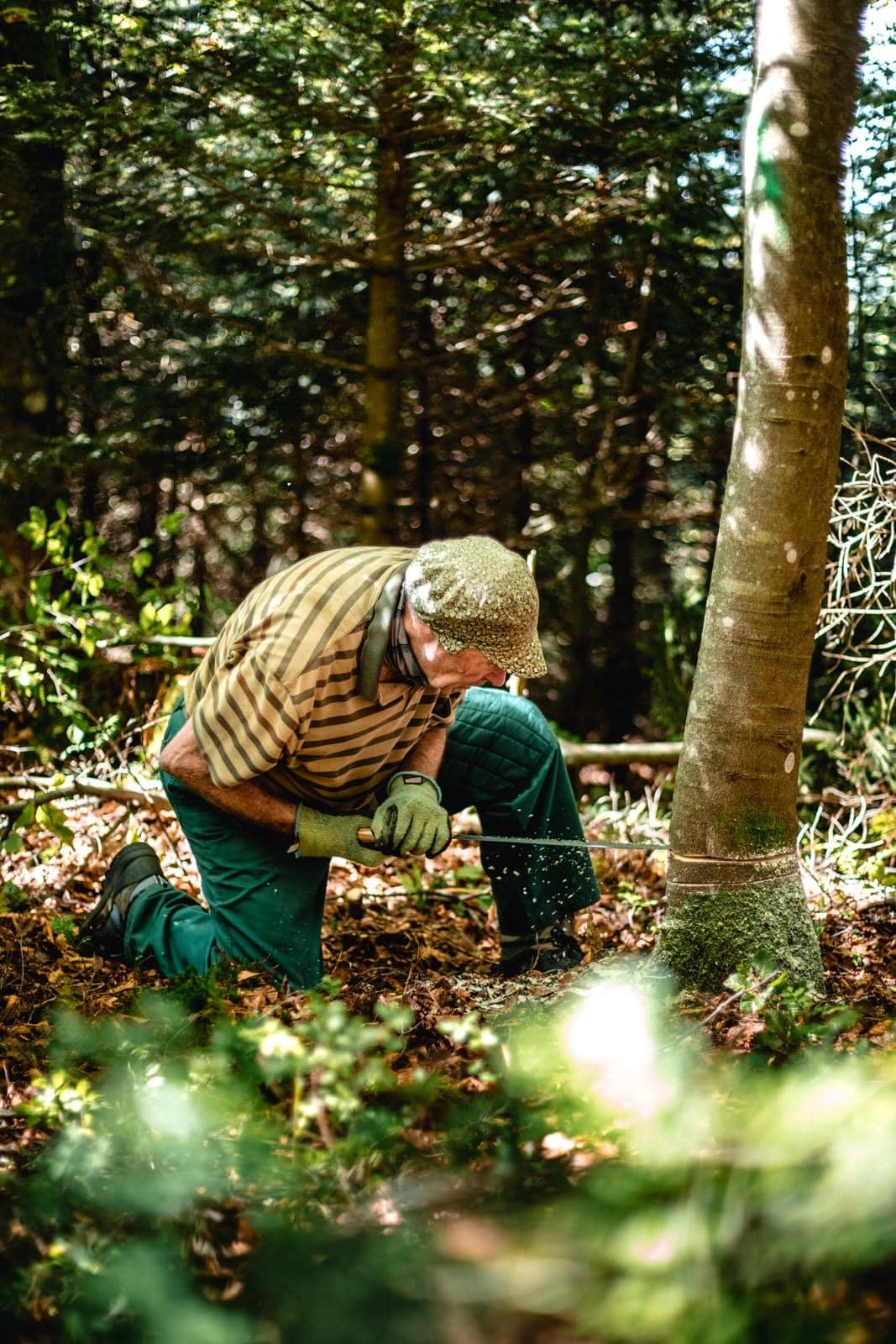 Ein alter Mann sägt einen Baum an