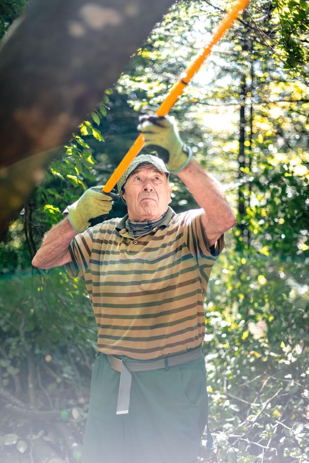 Ein alter Mann sägt einen Ast mit einer Astsäge ab im Sommer im Wald