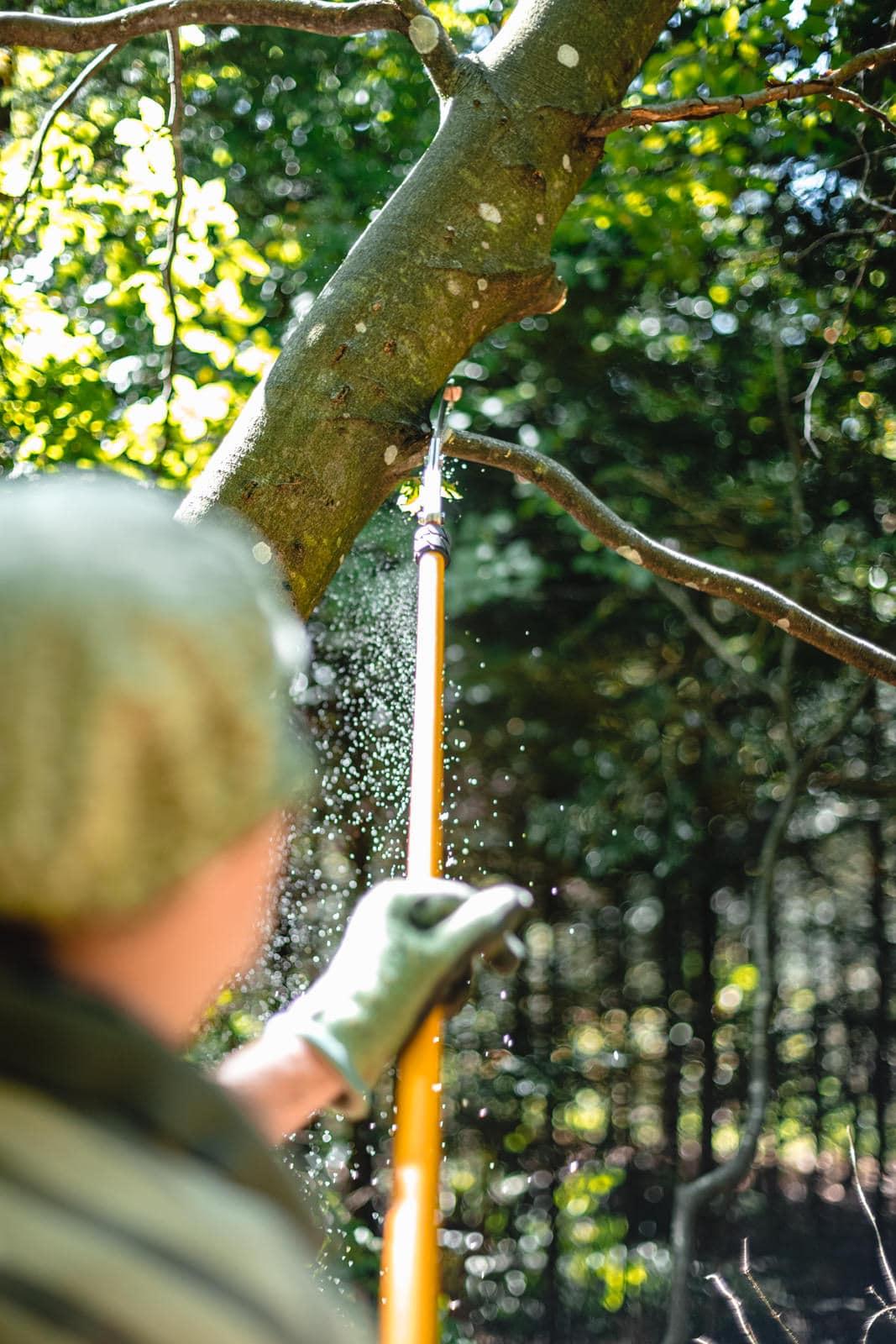 Ein Mann sägt im Sommer im Wald einen Ast mit einer Astsäge von einem Baum ab