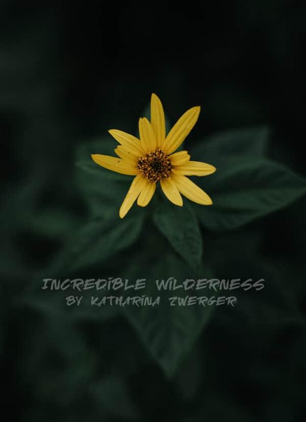 Eine gelbe Blume nah fotografiert mit grünem Stengel von oben.