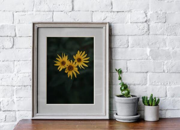 Drei gelbe Blumen in einem Fotorahmen auf einem Tisch als Fine-Art Print zu kaufen.